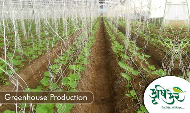 greenhouse crop production of marigolds How much does it cost to grow a greenhouse crop 20,000 square-foot greenhouse with simple production schedule of only 5 crops: petunia flats, marigold.